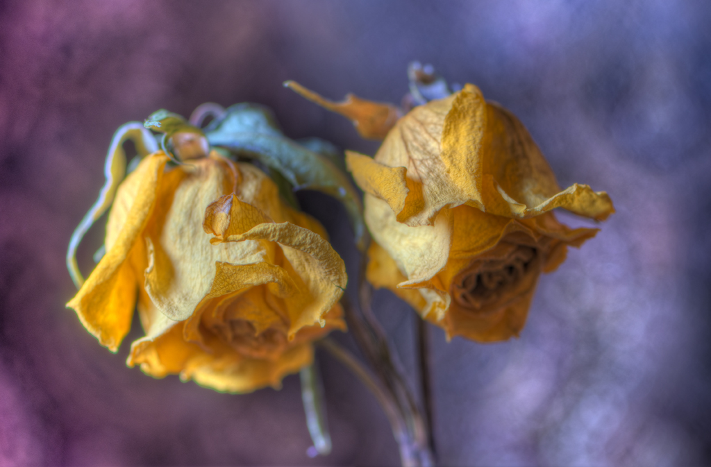Dried Flowers 01