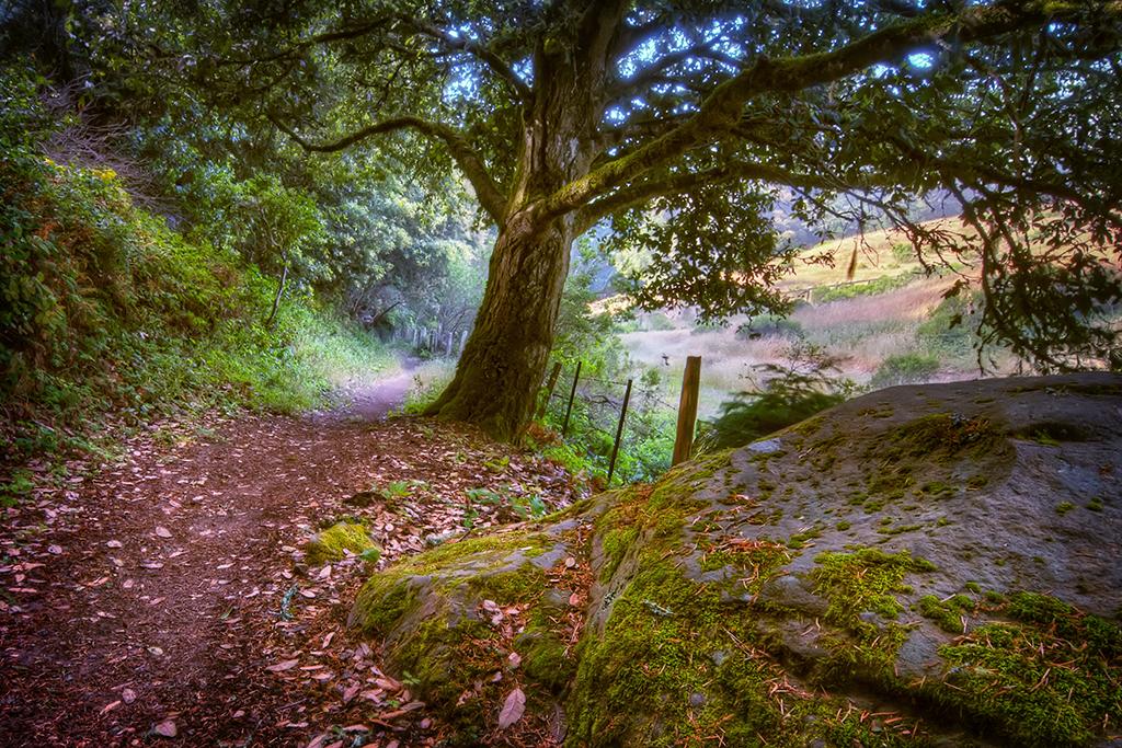Huddert Trail 01