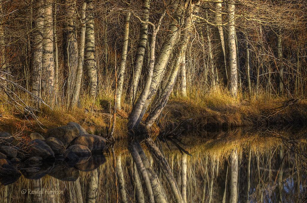 Silver Lake Aspens
